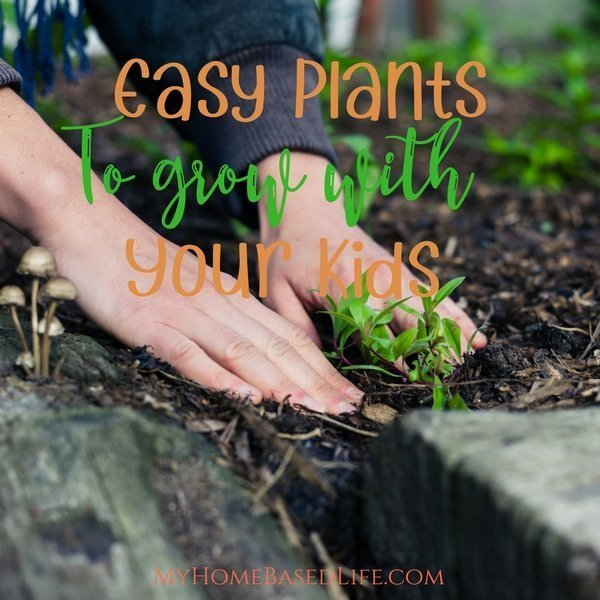 Easy Plants to grow with your kids