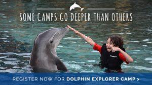 Dolphin Explorer Camp at Dolphinaris Arizona