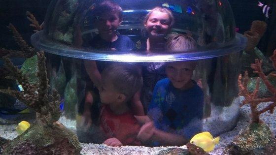 Legoland Discovery Center & Sea Life Aquarium