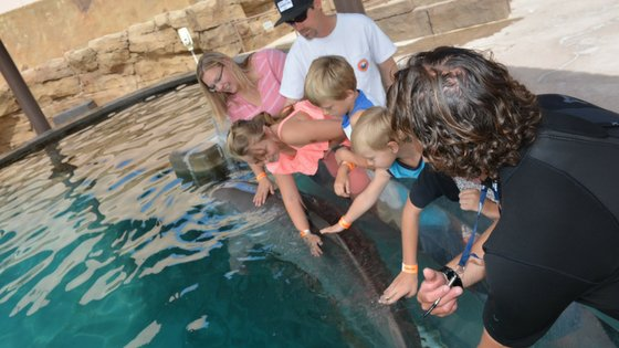 Dolphinaris, Arizona is one attraction you do not want to miss out on. A very kid-friendly atmosphere to interact with dolphins. #dolphinaris #arizona #travelarizona #kidfriendly #familyfriendly #myhomebasedlife | Arizona Travel | Interact with Dolphins | Things to Do in Arizona | Bucket List