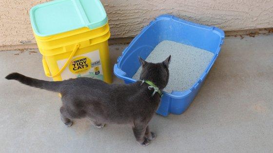 20 Uses for Cat Litter