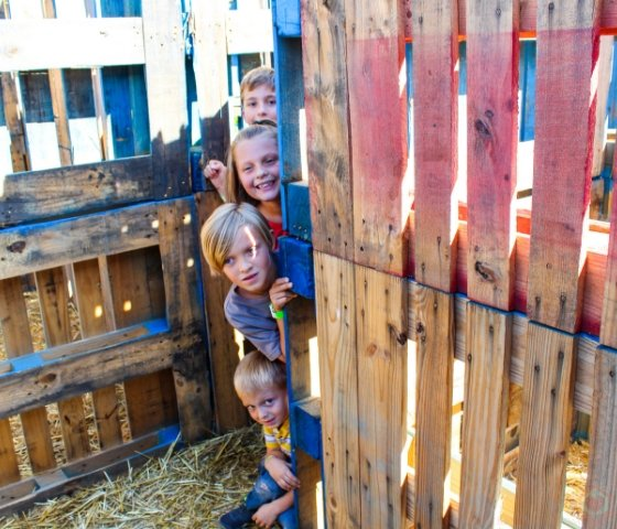 Vertuccio Farms Fall Festival is a must-do Arizona Fall Festival family experience. Full of endless family fun for kids of all ages. Here is what to expect. #arizona #fallfestival #vertucciofarms #myhomebasedlife | Fall Festivals in Arizona | Arizona Family Fall Festivals | Corn Mazes in Arizona | Vertuccio Farms