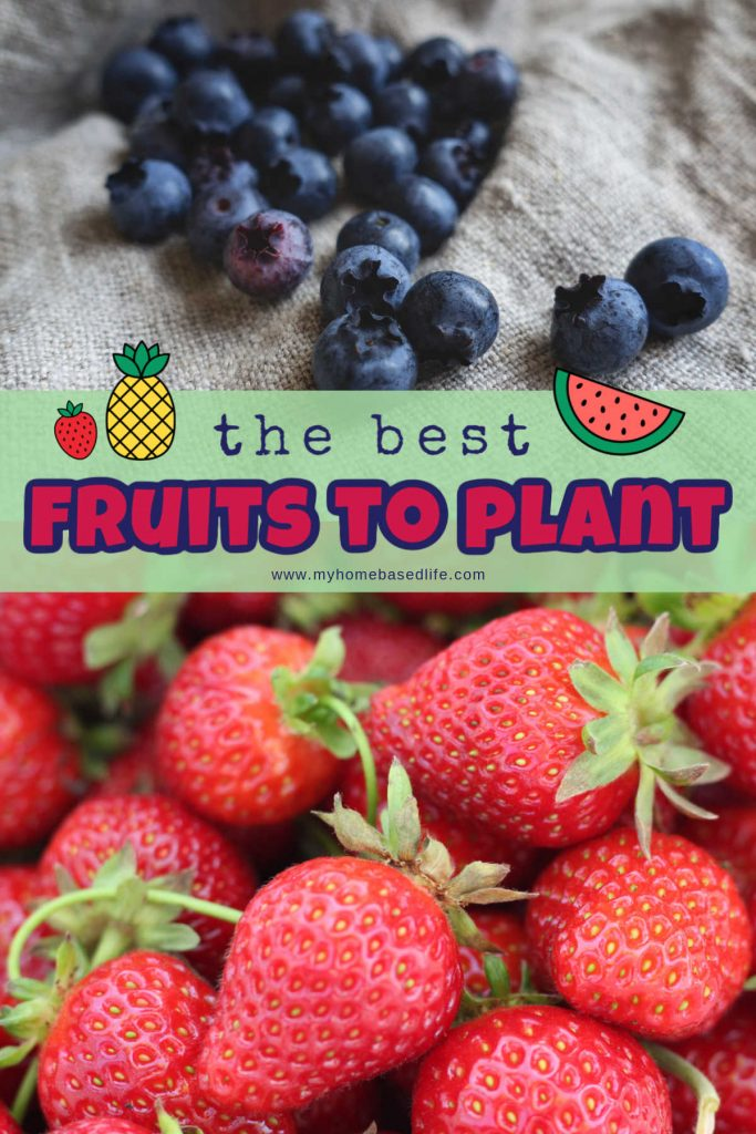 fruits to plant in a garden