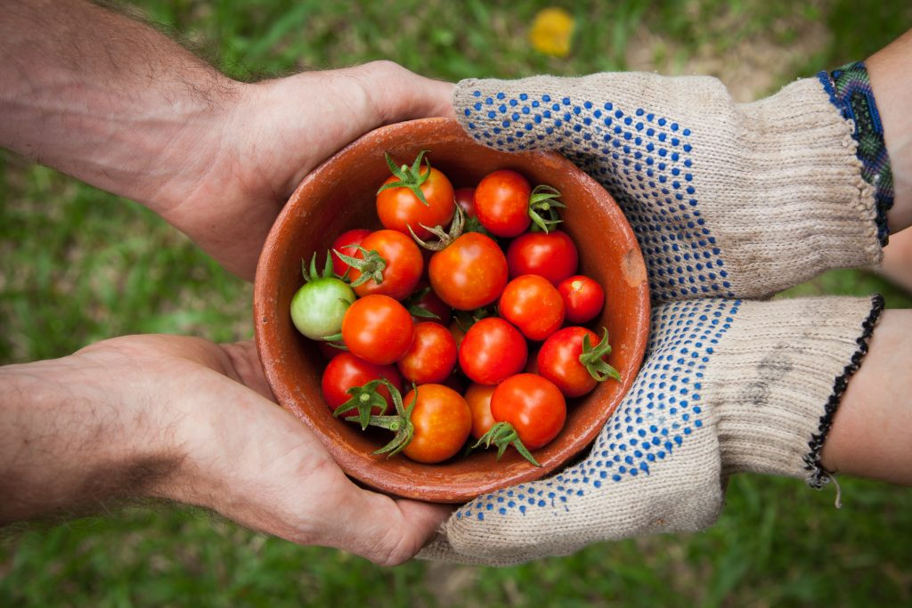 tips for growing the best tomatoes
