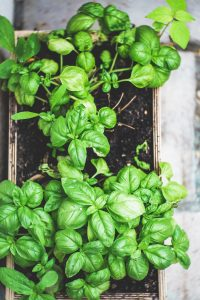 herbs to grow in a container garden