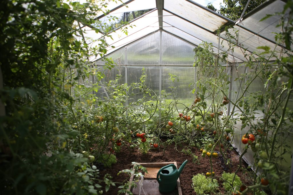 best vegetables to grow in a container garden